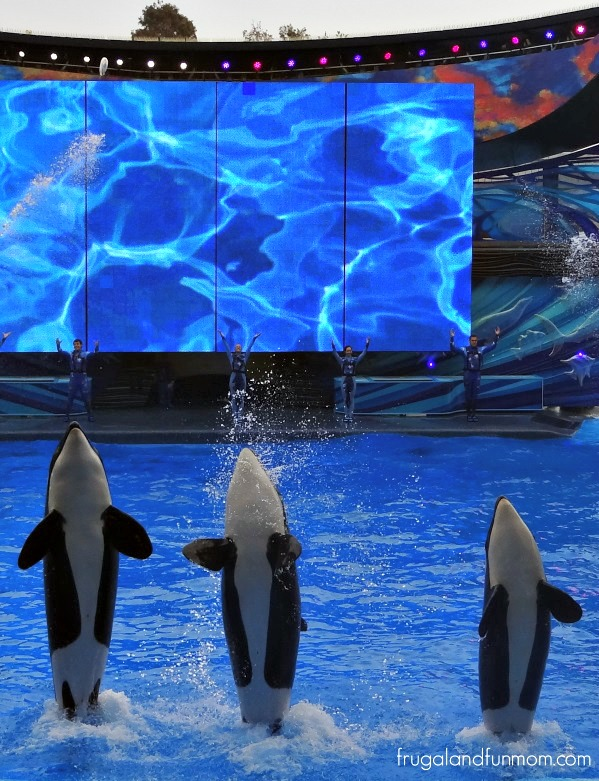 Shamu and friends performance at SeaWorld Orlando
