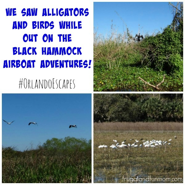 Birds spotted on the Black Hammock Airboat Adventures