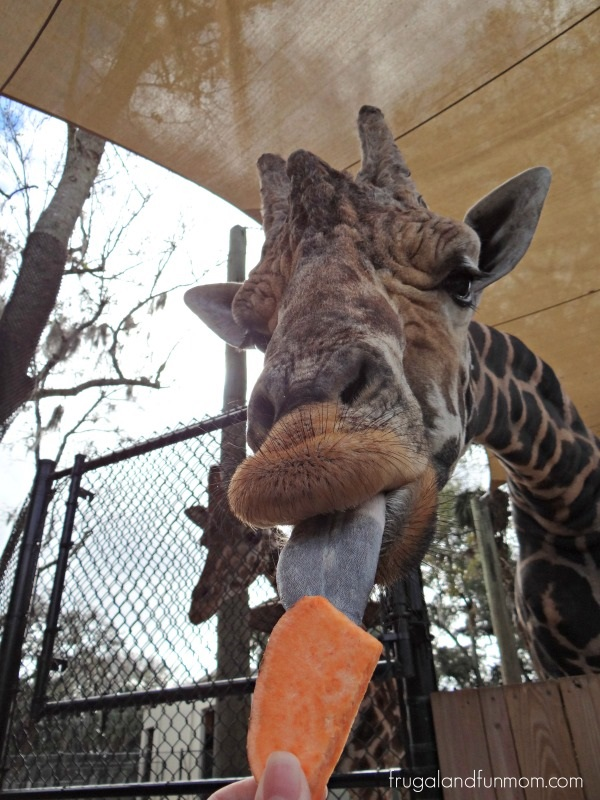 Visiting The Central Florida Zoo And Botanical Gardens