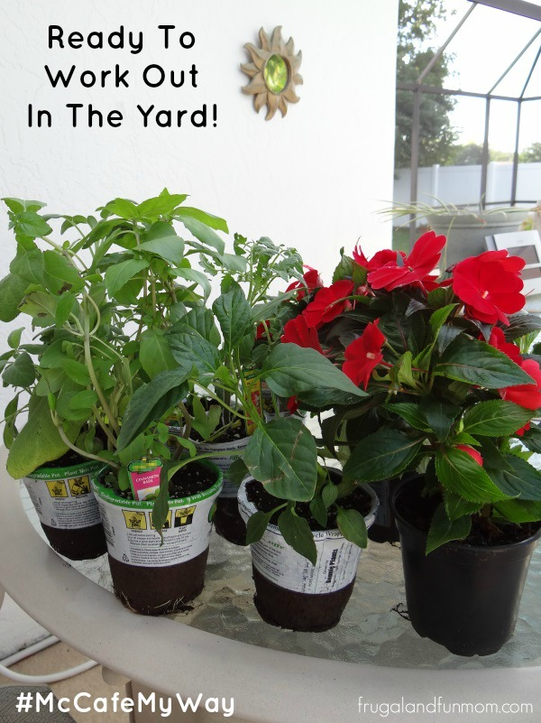 Plants from Walmart