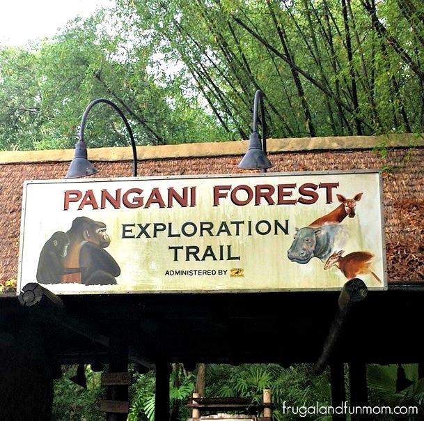 Animal Kingdom Pangani Forest
