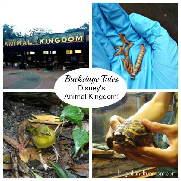 Backstage Tales at Disney's Animal Kingdom!