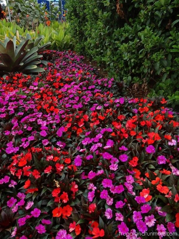 Flowers at EPCOT International Flower & Garden Festival