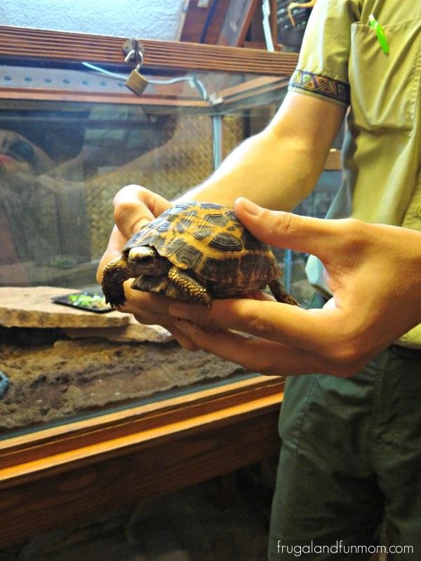 Turtle being treated at Animal Kingdom