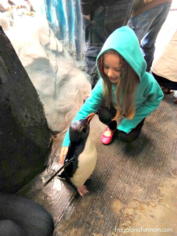 Petting Penguins at Seaworld