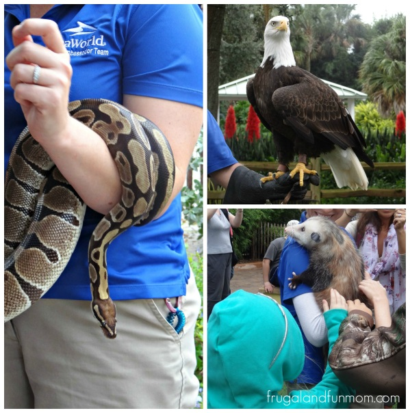 Up close with Animals at Seaworld