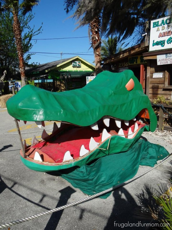 Gator Decor Black Hammock Airboat Adventures