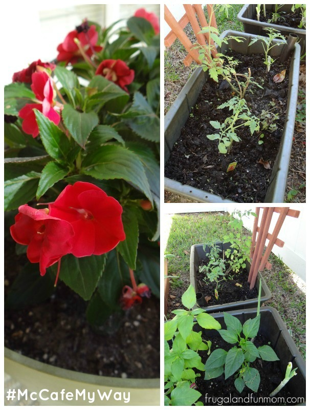 Container Gardening and Earth Boxes