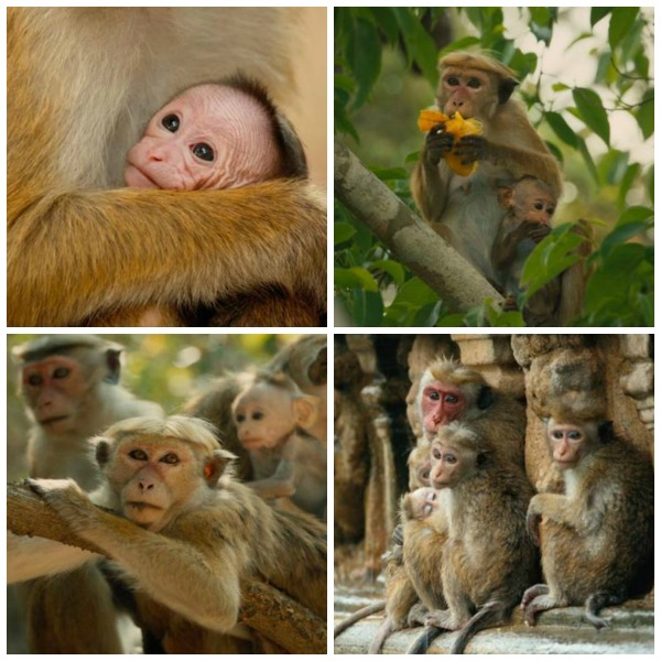 Monkey Kingdom Collage