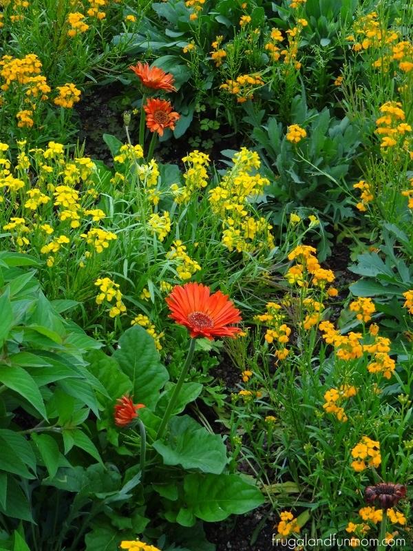 EPCOT International Flower & Garden Festival Flowers