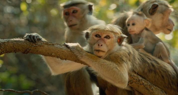 Monkey Kingdom 2