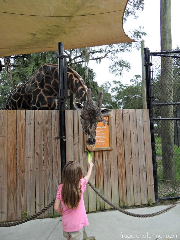 Feeding Giraffe at Central Florida Zoo