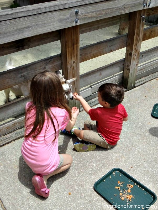 Feeding the Goats at the Central Florida Zoo