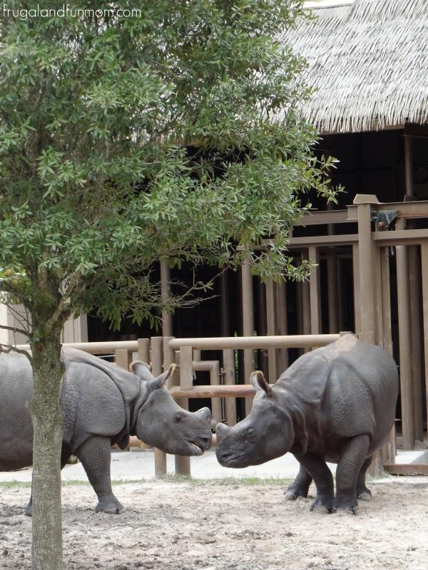 Rhino photo at Central Florida Zoo