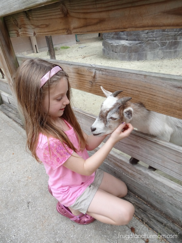 Visiting the Pygmy Goats at the Central Florida Zoo Sanford